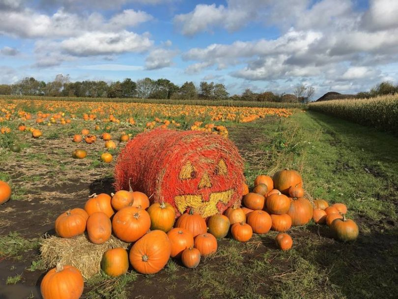 The Best of Autumn Things to Do in Liverpool 1